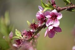 Spring flowers. In full Sun Stock Photos