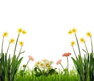 Spring flowers in garden Royalty Free Stock Photo