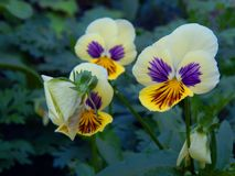 Spring flowers in the garden. Close up stock photos