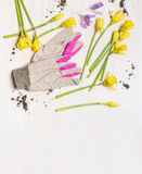 Spring flowers and garden gloves on white wooden background, top view, place for text. Royalty Free Stock Photos