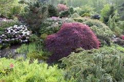 Spring flowers garden Stock Image