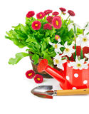 Spring flowers with garden tools Royalty Free Stock Image