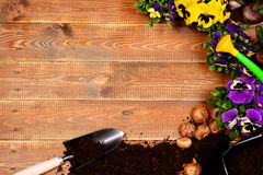 Spring flowers and garden tools on wooden table. Stock Image