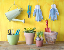 Spring flowers and gardening tools Stock Image