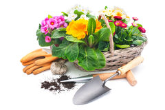 Spring flowers with gardening tools Stock Image