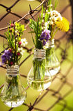 Spring flowers in glass bulbs Stock Images
