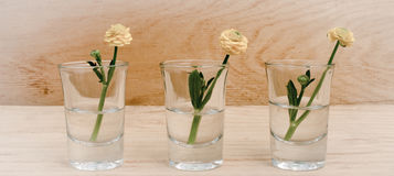 Spring flowers in glasses on a wooden table background with banner add. Vintage style. Toning image. Three spring or summer flowers in glasses on a wooden table Royalty Free Stock Images