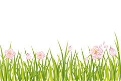 Spring flowers in grass Stock Image
