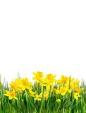 Spring flowers and grass Royalty Free Stock Photography