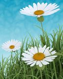 Spring Flowers in Grass on blue sky Stock Image