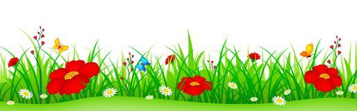Spring flowers and grass header. Green grass with cute colorful spring flowers illustration isolated white background. Can use as web site header / Footer / Stock Photography