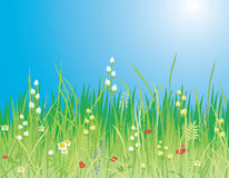 Spring. Flowers & grass - Vector. Vector illustration of an idyllic spring landscape with grass flowers and sun. A beautiful meadow Royalty Free Stock Photo