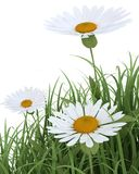 Spring Flowers in Grass  on white Stock Photo