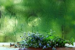 Spring flowers on a green background Stock Photos