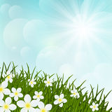 Spring flowers on green grass Royalty Free Stock Images