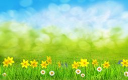 A spring flowers and green grass background stock illustration