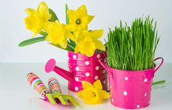 Spring flowers and green grass with garden tools . Stock Photo