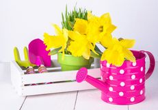 Spring flowers and green grass with garden tools . Spring flowers and green grass with garden tools on white background Stock Photography