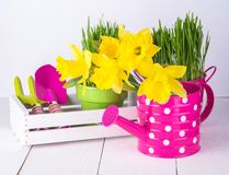 Spring flowers and green grass with garden tools . Stock Photos