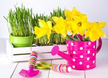 Spring flowers and green grass with garden tools . Stock Image