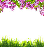 Spring flowers  and green grass Royalty Free Stock Photos