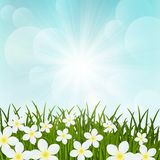 Spring flowers on green grass Royalty Free Stock Image