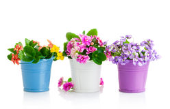 Spring flowers with green leaves in bucket Royalty Free Stock Photo