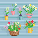 Spring flowers growing in the garden, icons and borders elements  on white. Royalty Free Stock Photography