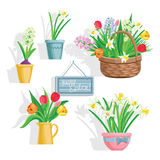 Spring flowers growing in the garden, icons and borders elements  on white. Stock Photos