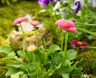 Spring flowers growing outdoor Stock Photography
