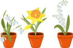 Spring flowers growing in the pods. raster Illustration. Spring flowers growing in the pods. Lily of the valley and daffodils isolated on white background royalty free illustration