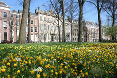 Spring Flowers in The Hague Stock Photo