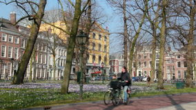 Spring flowers in The Hague, Holland stock video footage