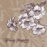 Spring flowers. Hand draw doodle vector illustration on grunge  Royalty Free Stock Photography
