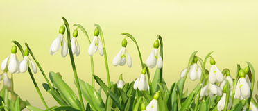 Spring flowers header Royalty Free Stock Images