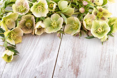Spring flowers hellebore pastel colors Easter Card Stock Images