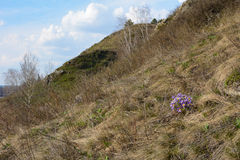 Spring flowers on a hillside Stock Photography