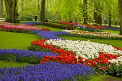 Spring flowers in holland garden Royalty Free Stock Photo