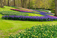 Spring flowers in holland garden Royalty Free Stock Image