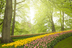 Spring flowers in holland garden Stock Photos