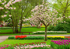 Spring flowers in holland park Stock Photography