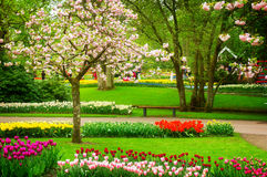 Spring flowers in holland park Royalty Free Stock Images