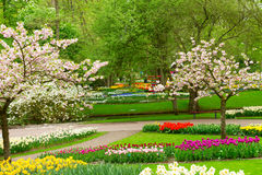 Spring flowers in holland park. Blooming spring trees with tulips and daffodils  in holland park Keukenhof, Netherlands Royalty Free Stock Photography