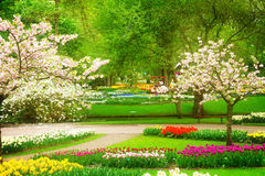 Spring flowers in holland park Stock Photo