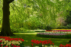 Spring flowers in holland park Royalty Free Stock Photography
