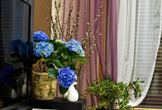 Spring flowers in home. Purple flowers blooming in potted plant in living room royalty free stock images