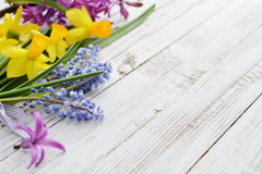 Spring flowers - hyacinth and narcissus Stock Photography