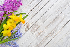 Spring flowers - hyacinth and narcissus Royalty Free Stock Photos