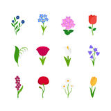 Spring flowers icons Royalty Free Stock Photo