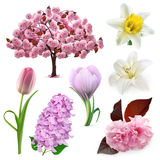 Spring flowers icons. Set with spring flowers, vector icons , isolated on white background Stock Image